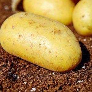 Tuffel (Aardappel)